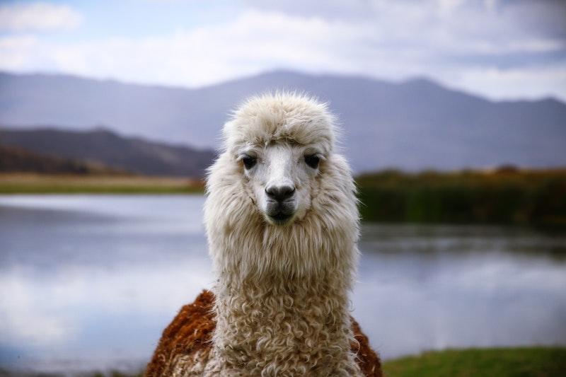 luna de miel en Perú con Tuttaltromo (n) do